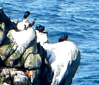 岩の上の鳥達