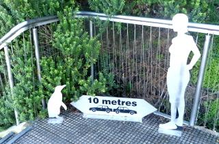ペンギンと遭遇を想定した看板