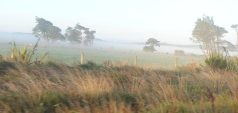 朝靄で煙る道路