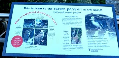ペンギンについての説明板