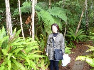 大きなシダの木と女性