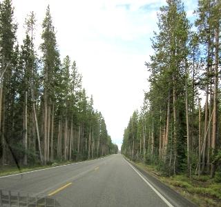 木々に囲まれたグランドティトンへの道