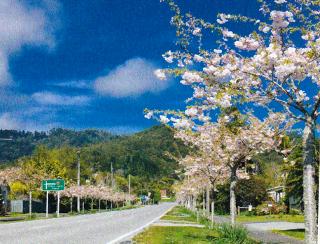 花が咲く街路樹