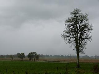 草原に立つ木