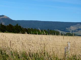 サウスランド地方の草原の中