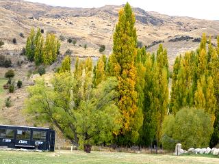 ニュージーランドの山の紅葉