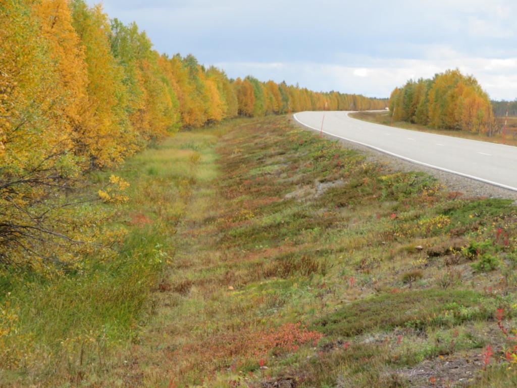 素晴らしい紅葉と道