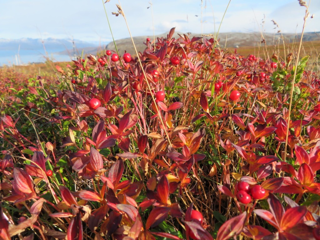 山上の紅葉